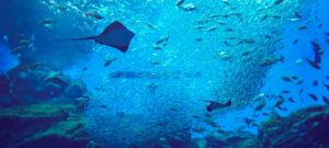 英単語帳 魚類・海洋生物の名前(1) 日本語→英語(カタカナ発音表示) クイズ・単語帳