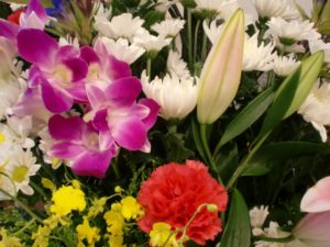 英単語の暗記カード「花」 花の名前の日本語→英語(カタカナ発音表示)クイズ・単語帳