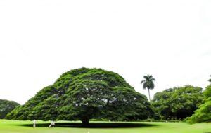 英単語の暗記カード「木」 樹木の名前の日本語→英語(カタカナ発音表示)クイズ・単語帳